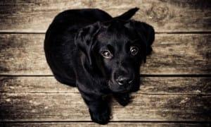 Olijfolie voor honden