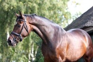 5 tips voor een glanzende vacht bij je paard