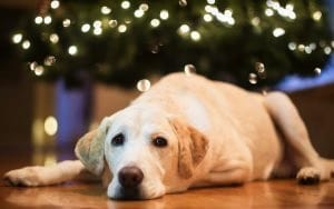 Fijne kerst - ook voor je hond