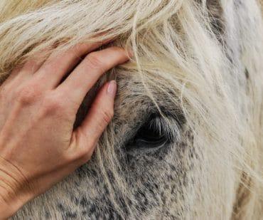 EMS horses