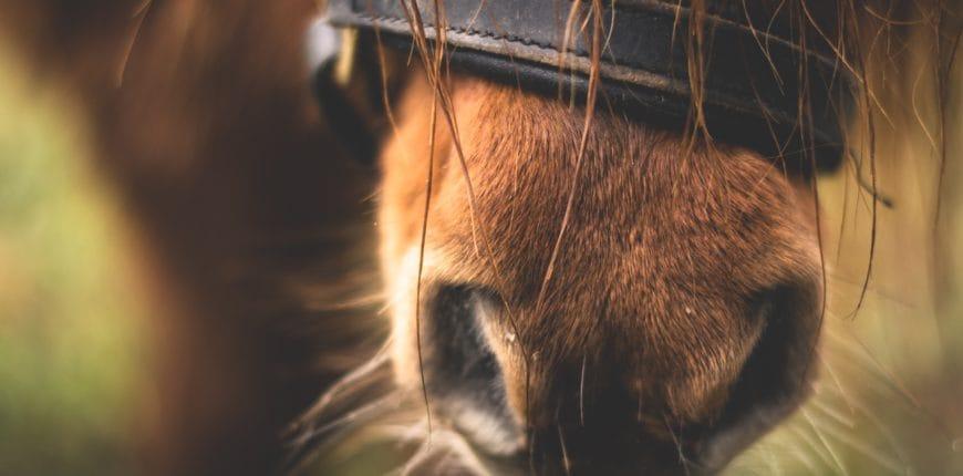 Horse nose Effektri