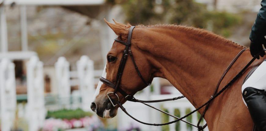 Paarden en magnesium
