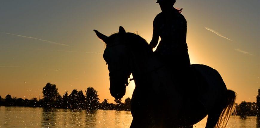 Horses summer