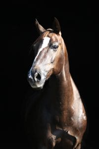 Omega-3 benefits for stallions