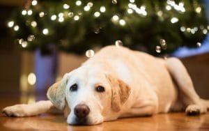 Hond kerst