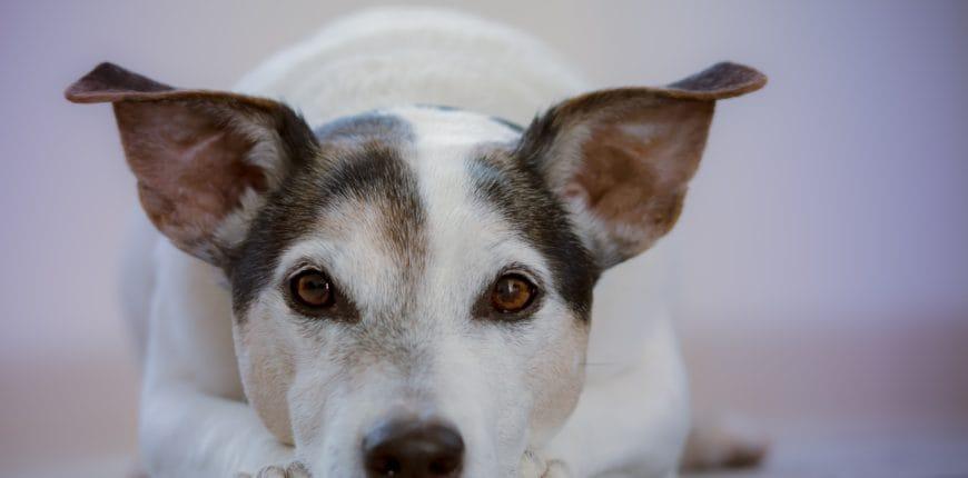 Older dog senior