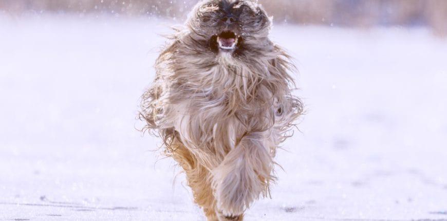 Hond sneeuw ijs