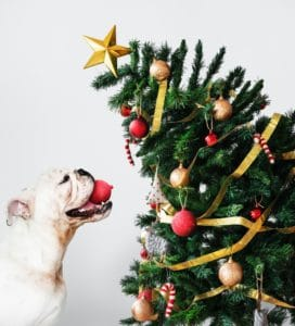 Hond kerst feestdagen
