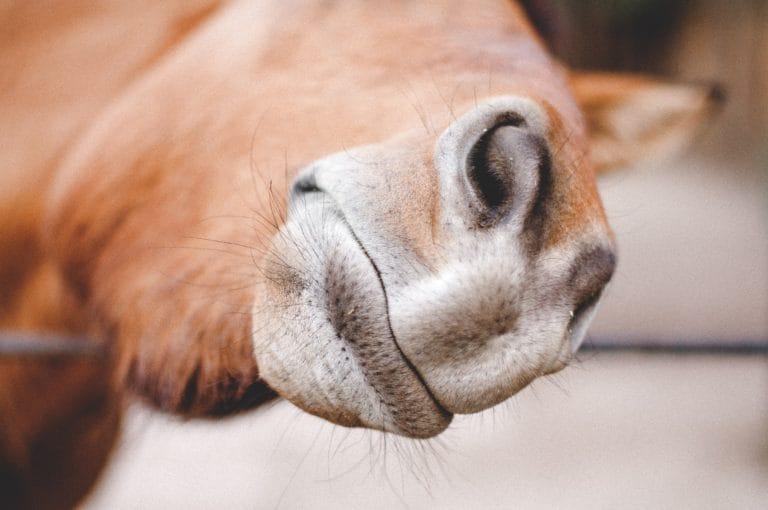 Tips supplementen paard