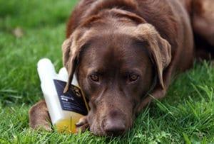 Hond met omega-3 Effektri