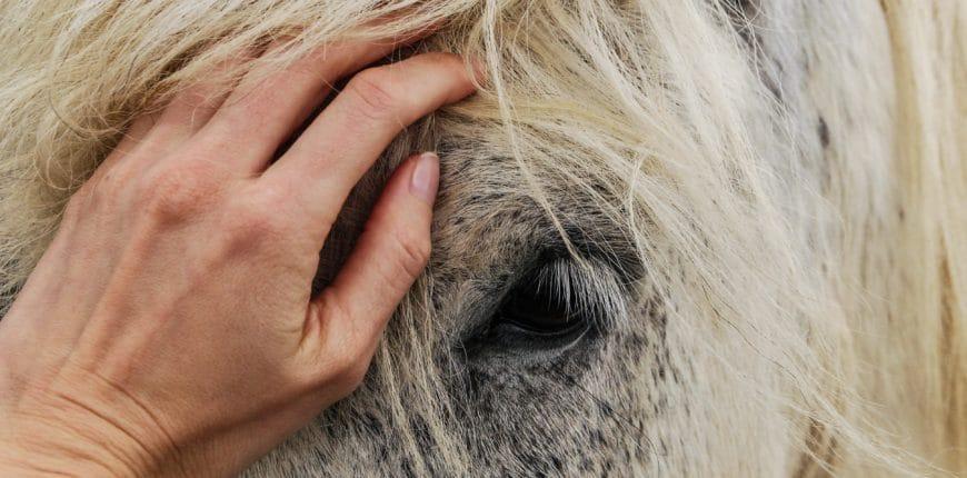 PPID bij paarden