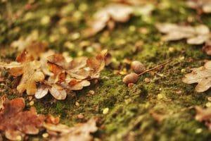 Gezonde herfst tips