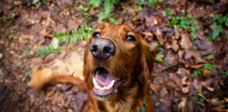 Herfst tips honden