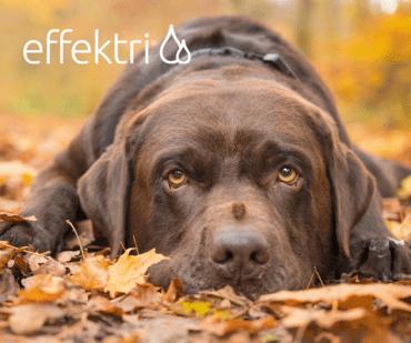 Herfst 9 tips voor je hond