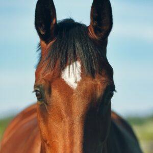 Paard effektri omega-3
